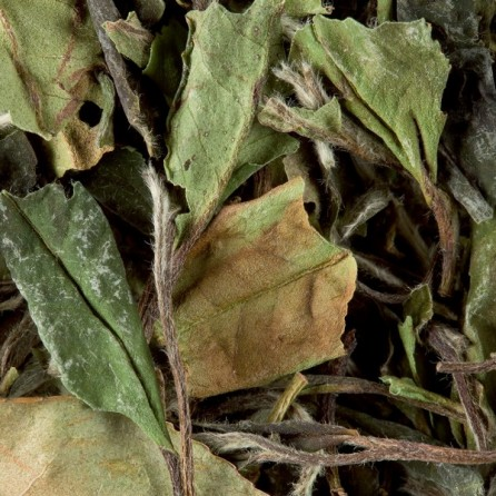 Pai Mu Tan «Pivoine blanche»